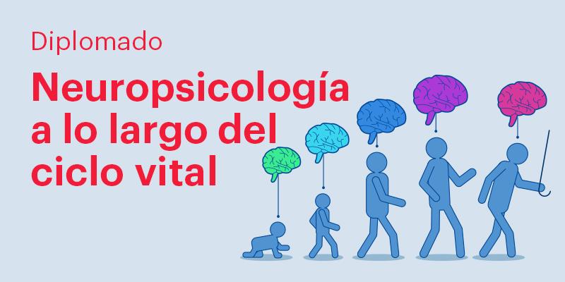 imagen de diplomado en neuropsicología a lo largo del ciclo vital